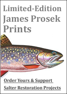 James prosek sea-run brook trout print