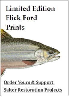 Flick Ford sea run brook trout prints for sale