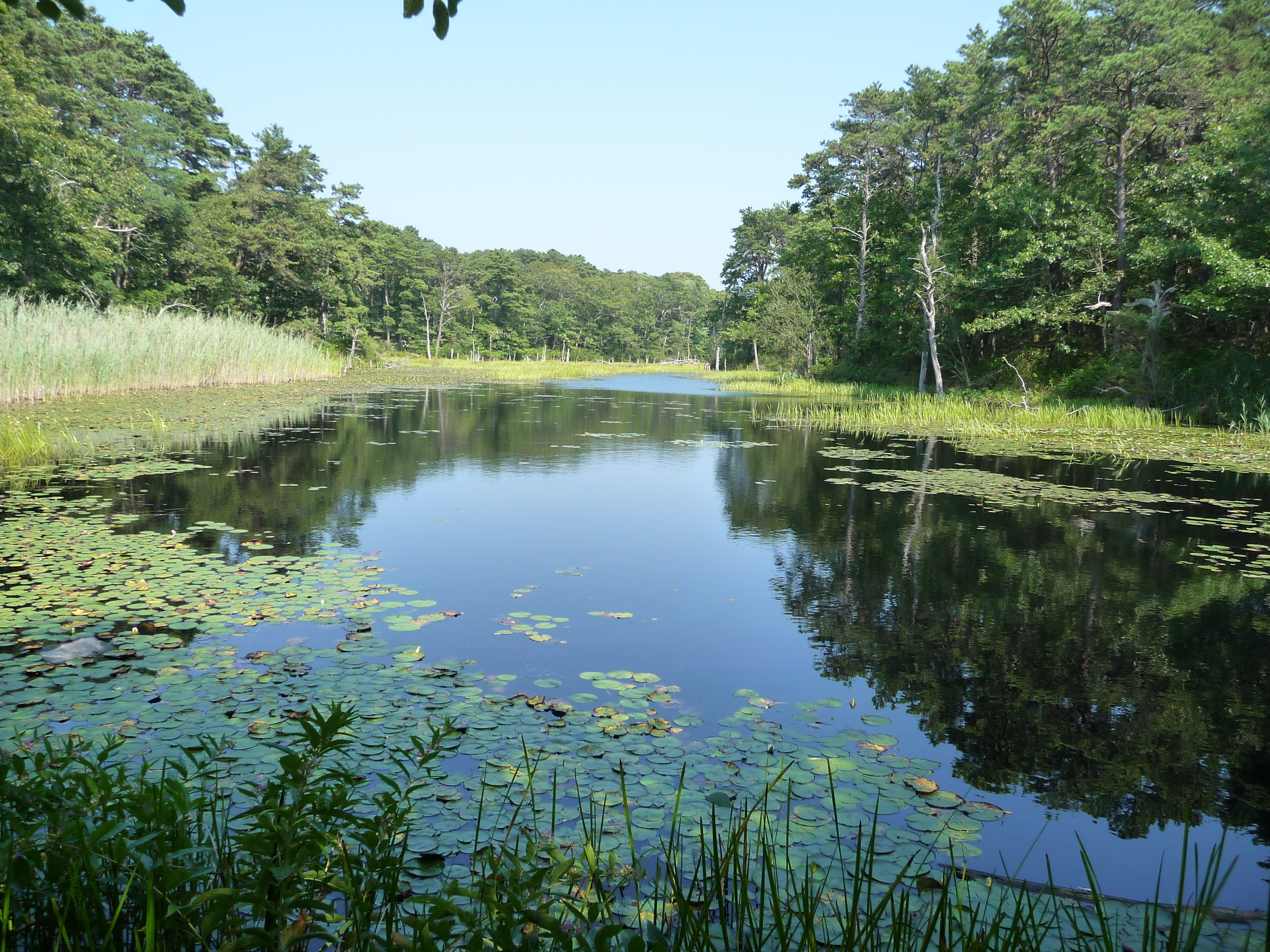 Fresh Brook Impoundment