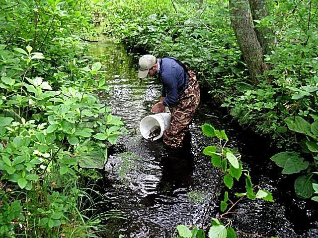 Pocasset Brook Trout Release