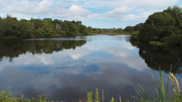 West Tisbury's Mill Pond